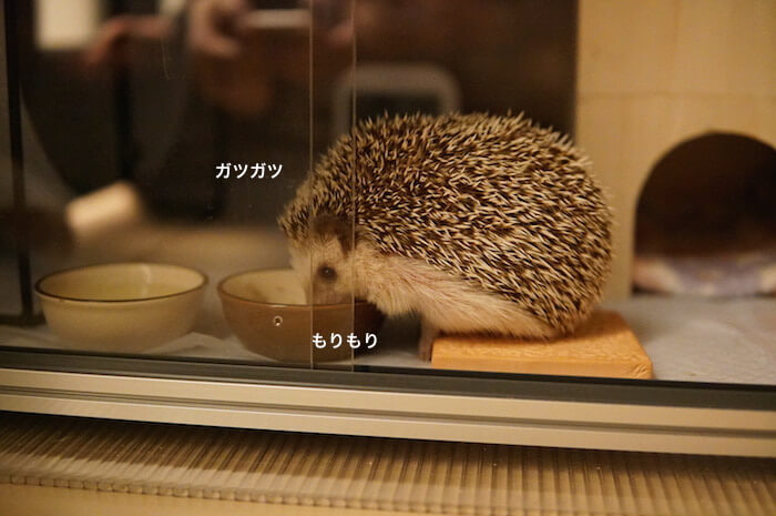 f:id:chikojirou:20170327211858j:plain