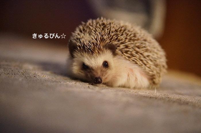 f:id:chikojirou:20170329215119j:plain