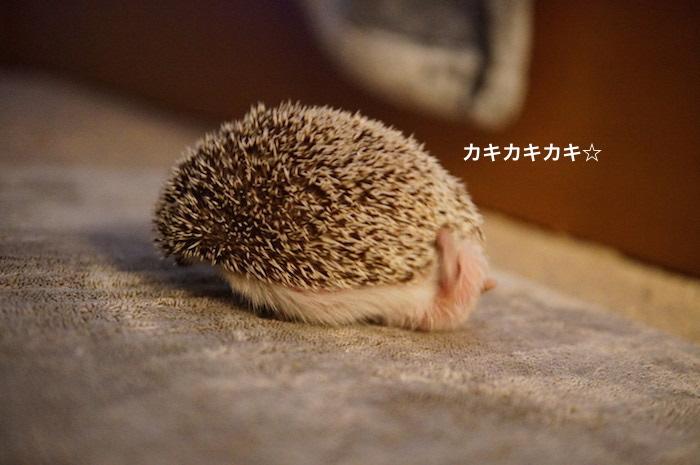 f:id:chikojirou:20170329215141j:plain