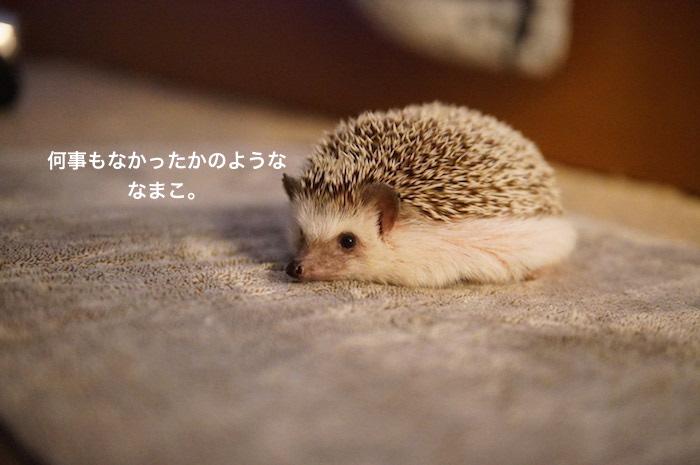 f:id:chikojirou:20170329215152j:plain