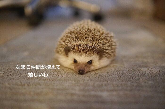 f:id:chikojirou:20170330214719j:plain