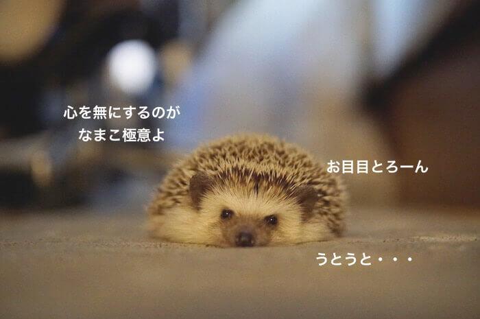 f:id:chikojirou:20170330214733j:plain