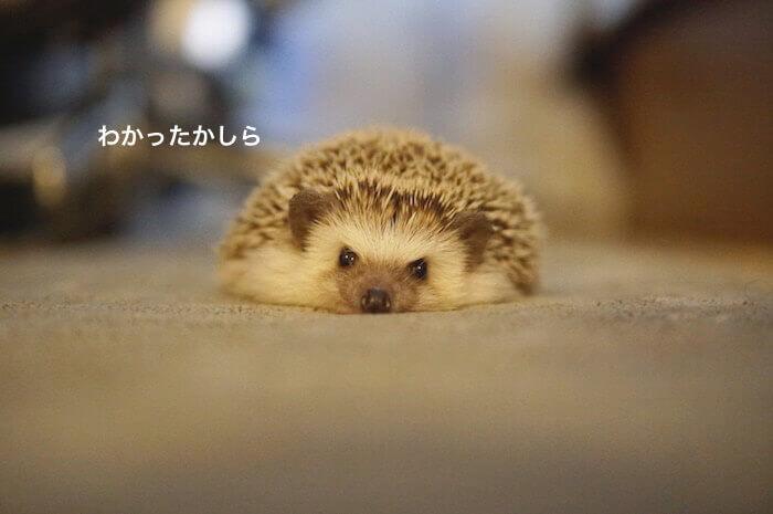 f:id:chikojirou:20170330214748j:plain