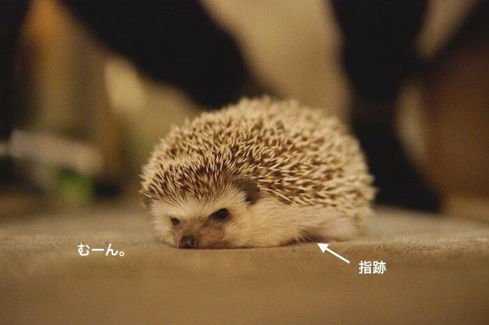 f:id:chikojirou:20170401121430j:plain