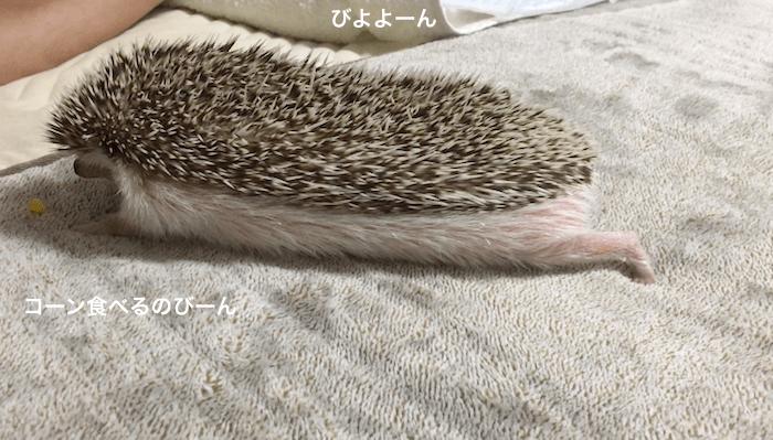 f:id:chikojirou:20170402164724p:plain