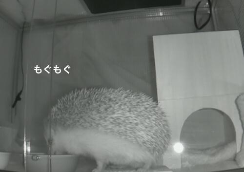 f:id:chikojirou:20170403214205j:plain