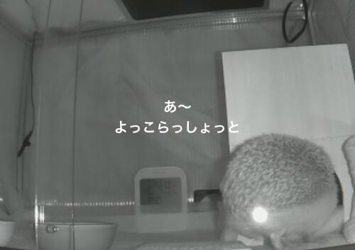 f:id:chikojirou:20170403214214j:plain