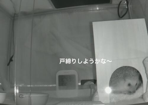 f:id:chikojirou:20170403214225j:plain