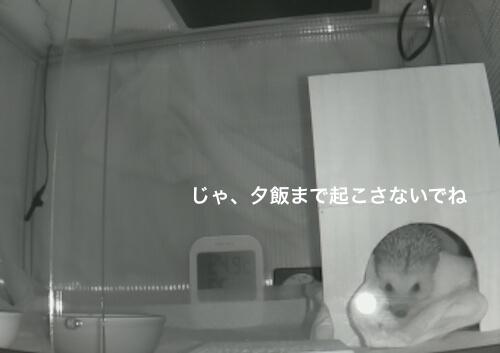 f:id:chikojirou:20170403214339j:plain
