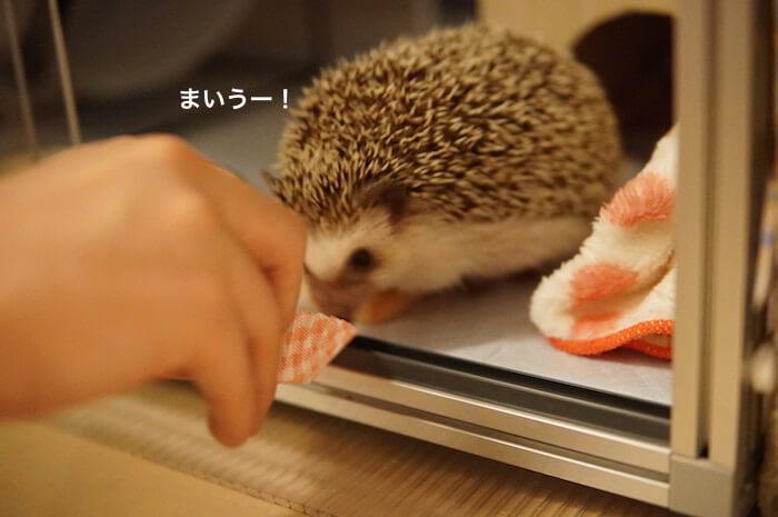 f:id:chikojirou:20170404221225j:plain