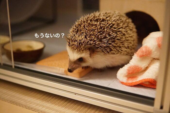 f:id:chikojirou:20170404221238j:plain