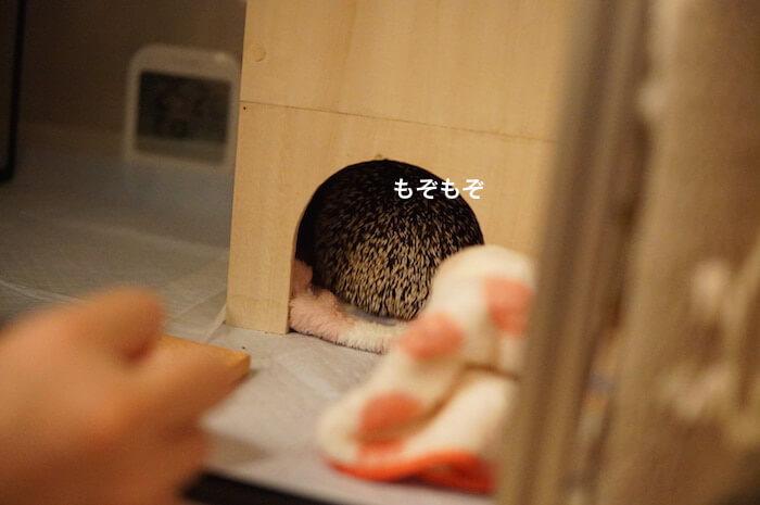 f:id:chikojirou:20170404221249j:plain