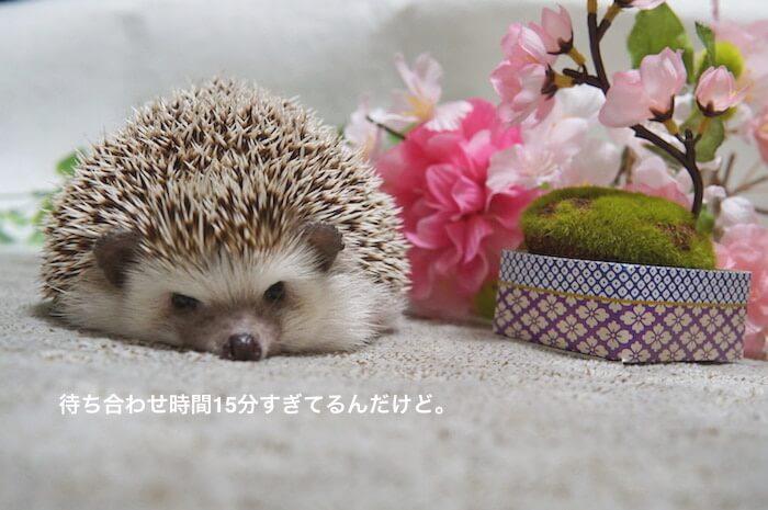f:id:chikojirou:20170408120948j:plain