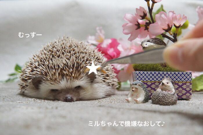 f:id:chikojirou:20170408121007j:plain