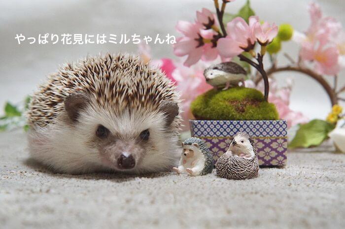 f:id:chikojirou:20170408121038j:plain