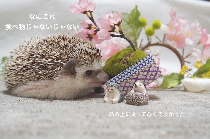 f:id:chikojirou:20170408121110j:plain