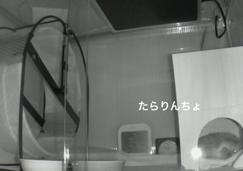 f:id:chikojirou:20170410220623j:plain