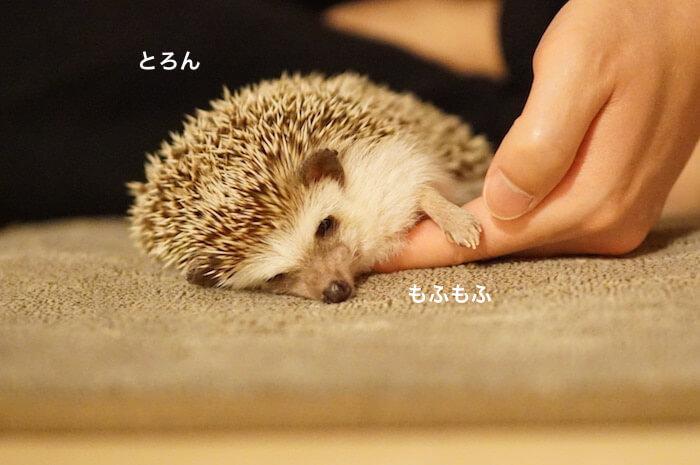 f:id:chikojirou:20170411215734j:plain