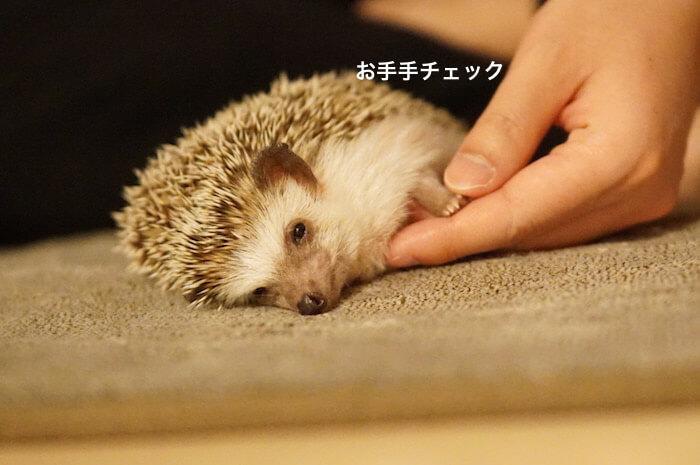 f:id:chikojirou:20170411215835j:plain