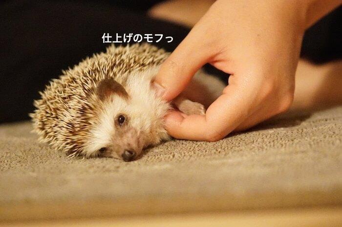 f:id:chikojirou:20170411215847j:plain