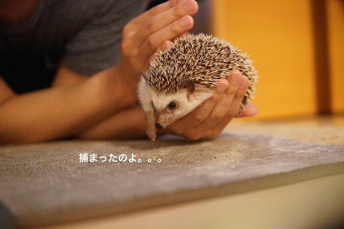 f:id:chikojirou:20170414211946j:plain
