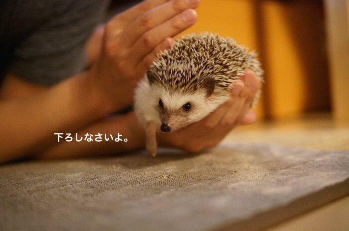 f:id:chikojirou:20170414212002j:plain