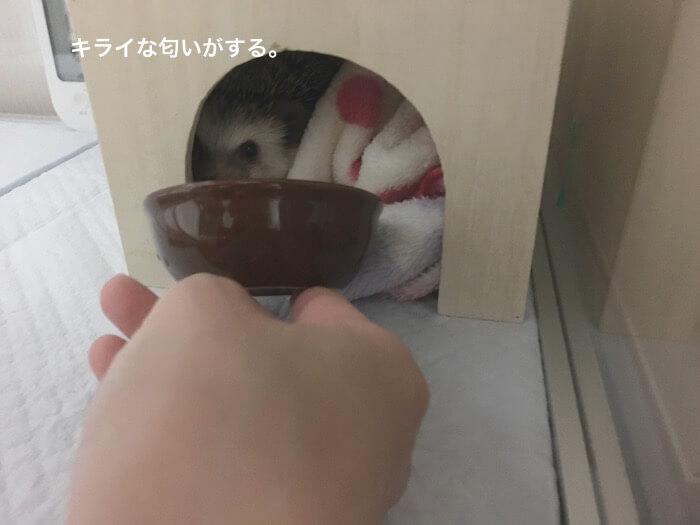 f:id:chikojirou:20170417192345j:plain