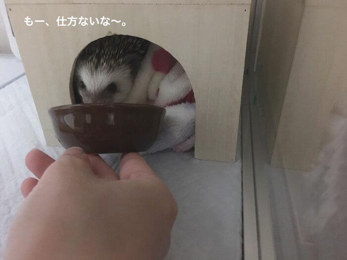 f:id:chikojirou:20170417192355j:plain