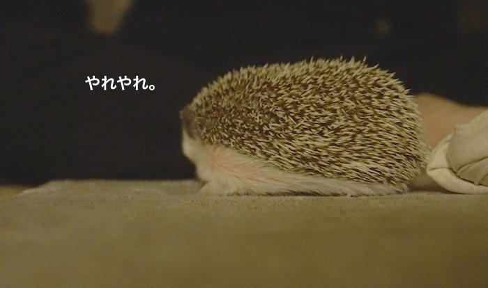 f:id:chikojirou:20170418215459p:plain