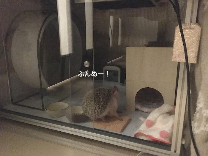 f:id:chikojirou:20170421214515j:plain