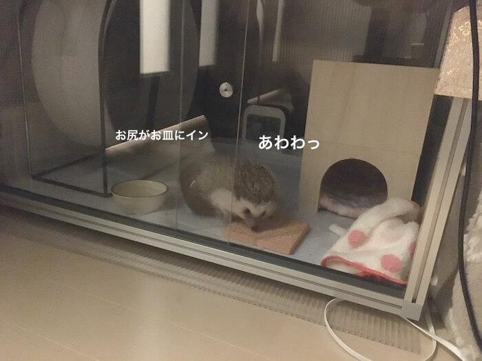 f:id:chikojirou:20170421214533j:plain