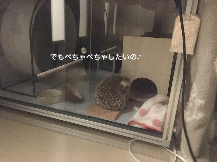 f:id:chikojirou:20170421214604j:plain