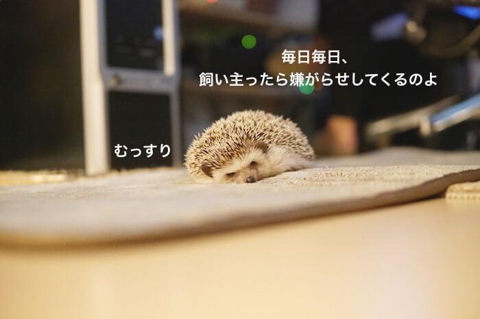 f:id:chikojirou:20170425174505j:plain