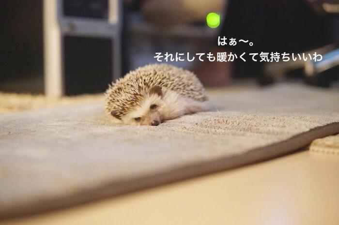 f:id:chikojirou:20170425174520j:plain
