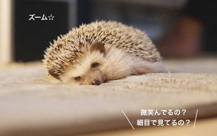 f:id:chikojirou:20170425174527j:plain