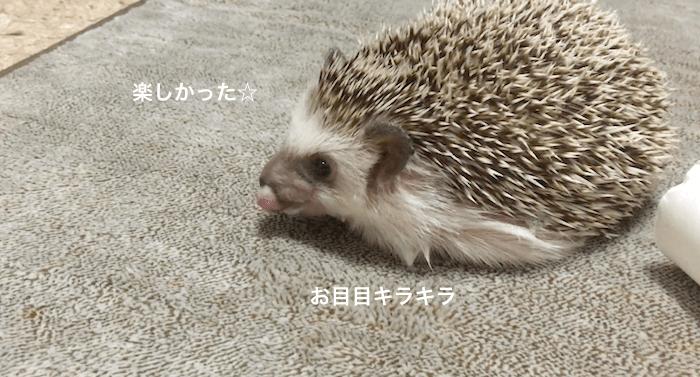 f:id:chikojirou:20170427211908p:plain