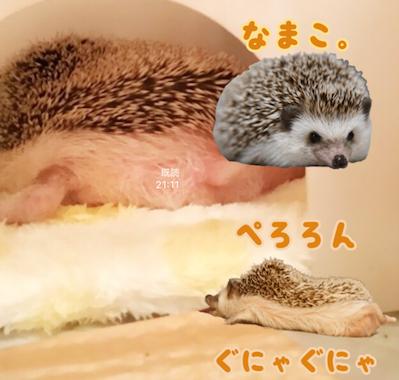 f:id:chikojirou:20170427212754p:plain