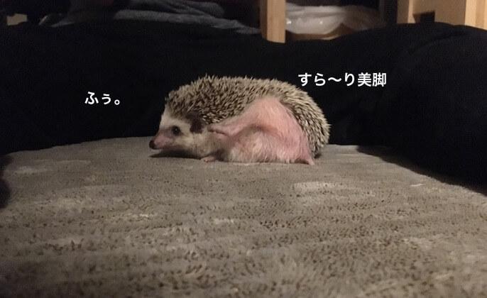 f:id:chikojirou:20170428232032j:plain