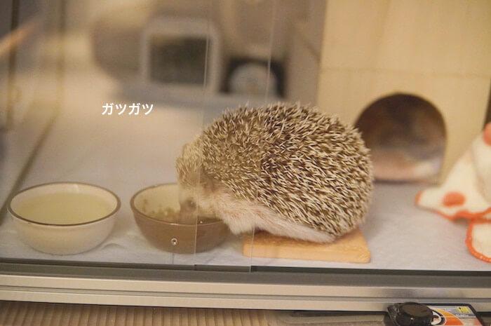 f:id:chikojirou:20170504205955j:plain