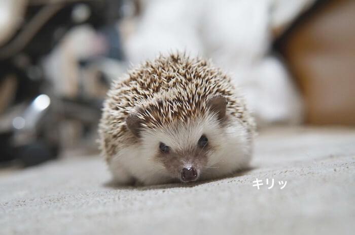 f:id:chikojirou:20170505104804j:plain