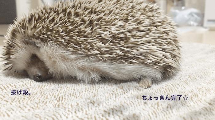f:id:chikojirou:20170505104844p:plain