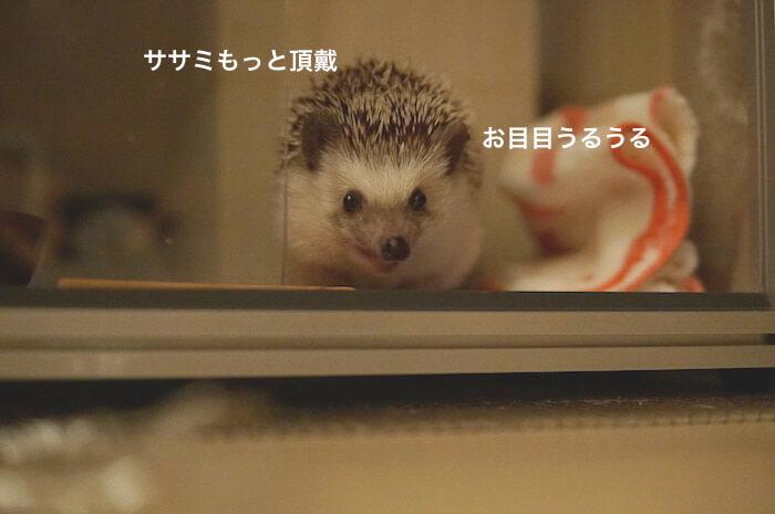 f:id:chikojirou:20170506211007j:plain