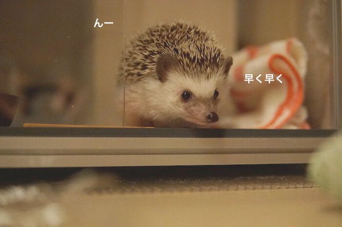 f:id:chikojirou:20170506211016j:plain