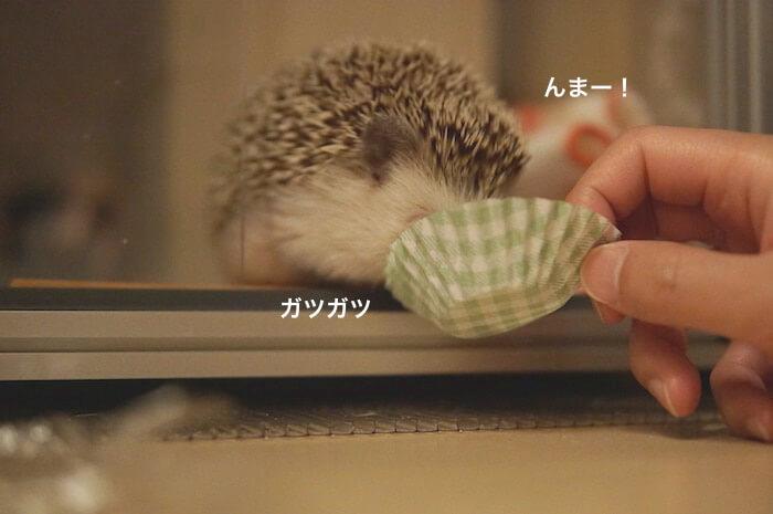 f:id:chikojirou:20170506211026j:plain