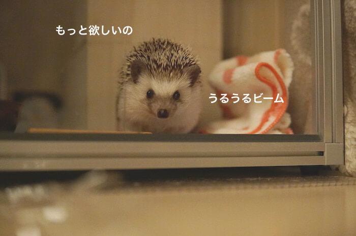 f:id:chikojirou:20170506211038j:plain
