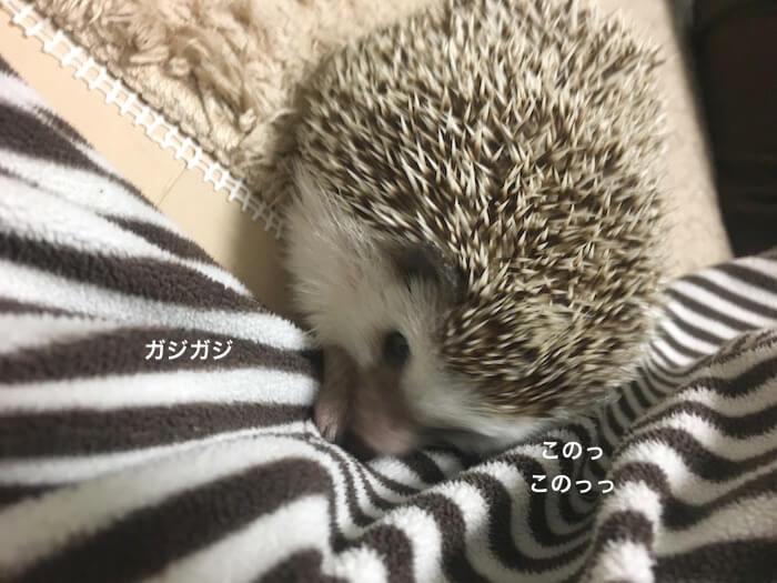 f:id:chikojirou:20170508220850j:plain