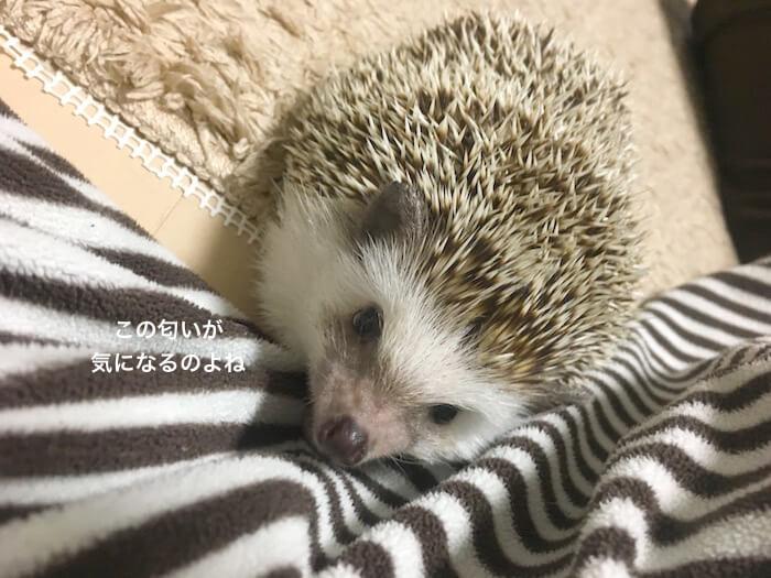 f:id:chikojirou:20170508220900j:plain