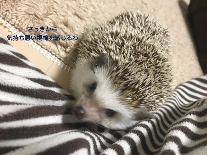f:id:chikojirou:20170508220912j:plain