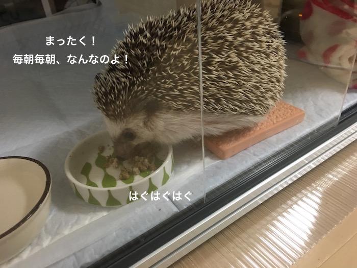 f:id:chikojirou:20170510222906j:plain