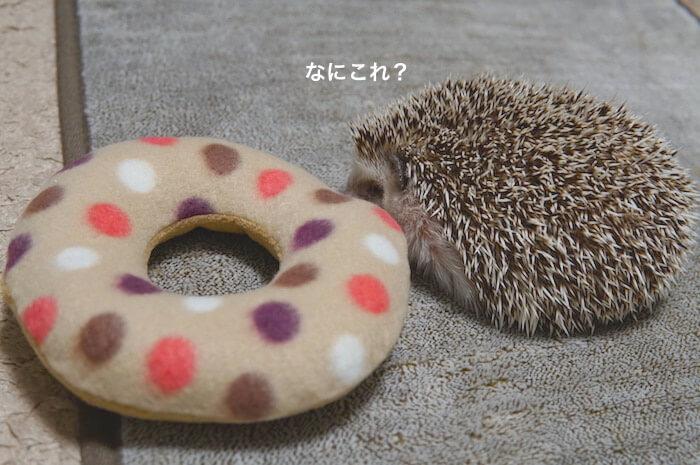 f:id:chikojirou:20170511222154j:plain